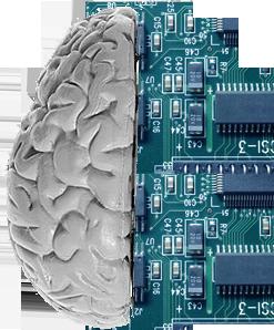 Brain Circut